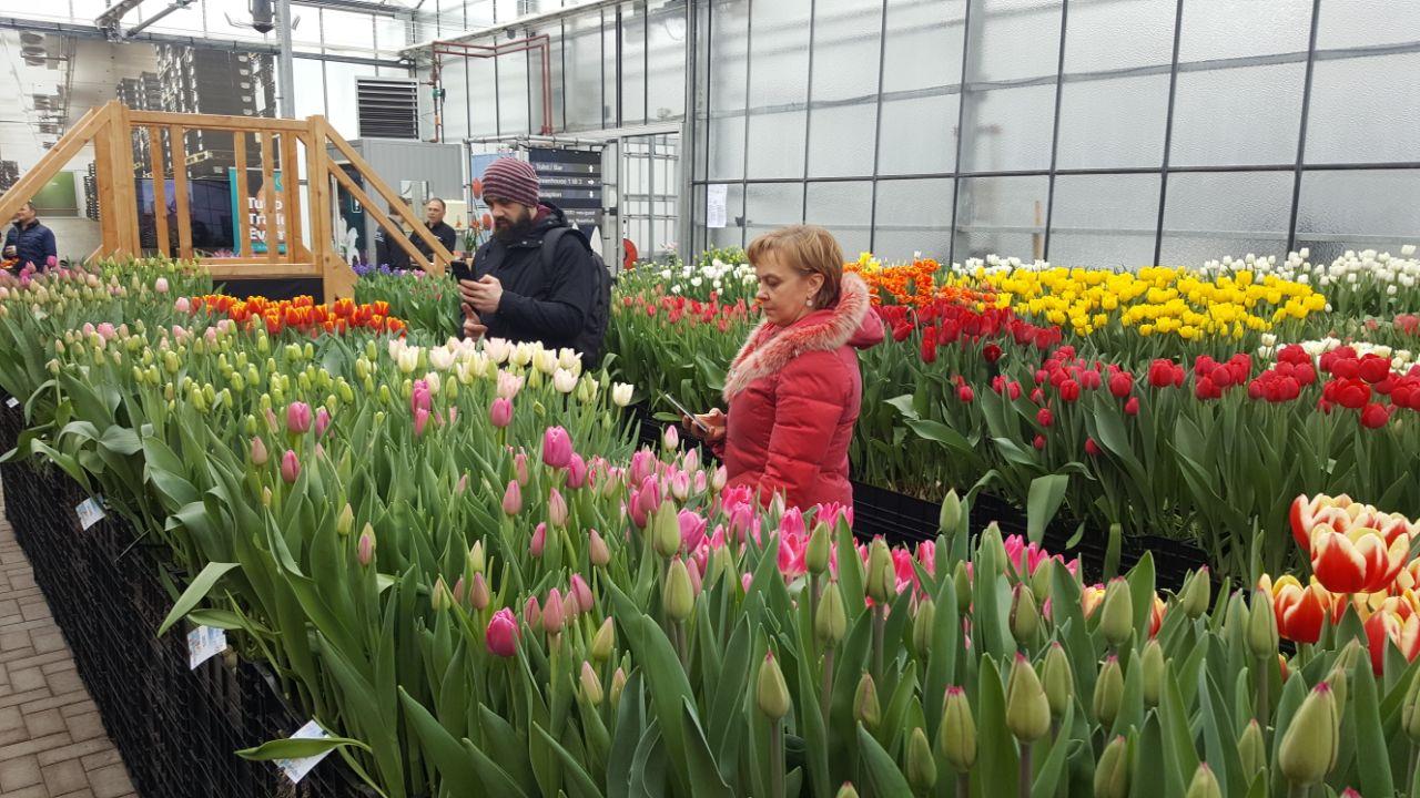 Znalezione obrazy dla zapytania Center-Flowers – гарантия качества ваших растений